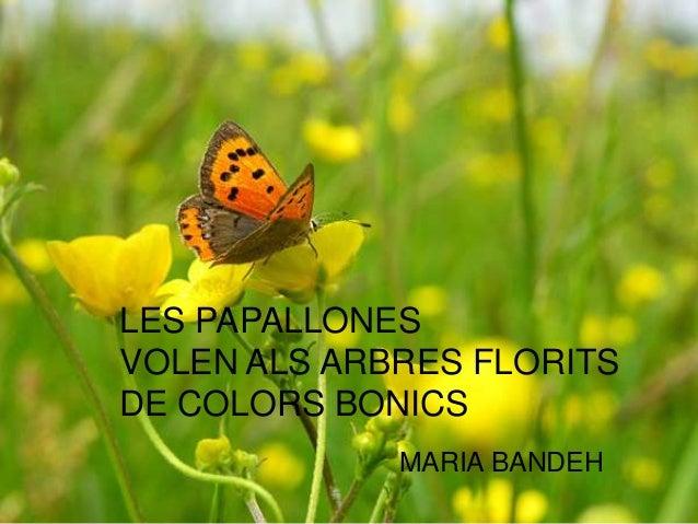 LES PAPALLONES VOLEN ALS ARBRES FLORITS DE COLORS BONICS MARIA BANDEH