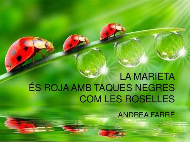 LA MARIETA ÉS ROJA AMB TAQUES NEGRES COM LES ROSELLES ANDREA FARRÉ