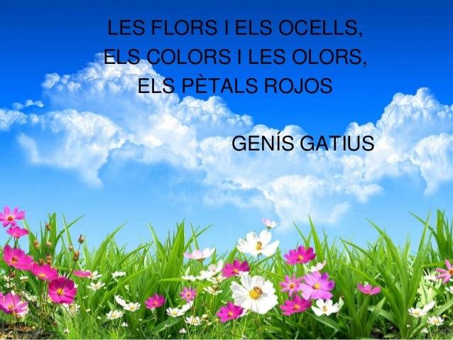 LES FLORS I ELS OCELLS, ELS COLORS I LES OLORS, ELS PÈTALS ROJOS GENÍS GATIUS