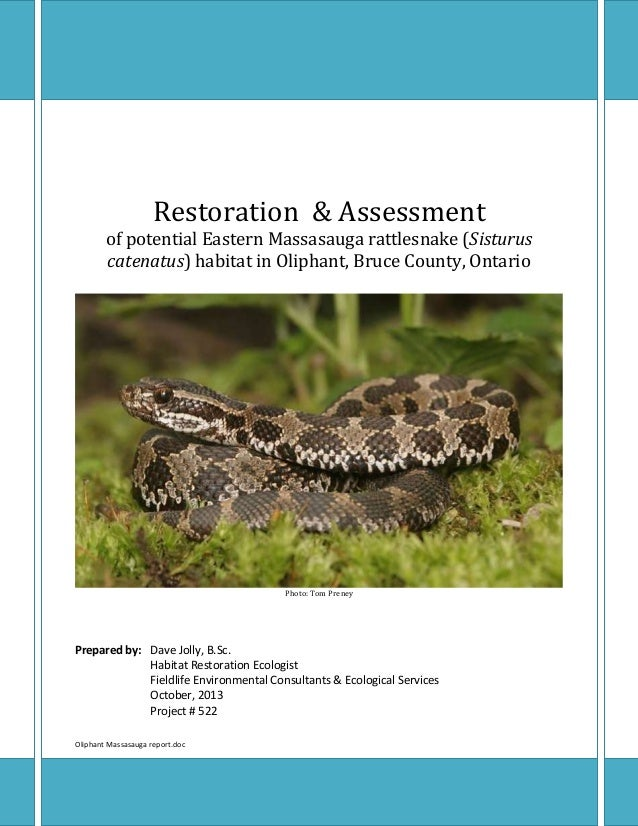 Oliphant Eastern Massassauga rattlesnake habitat restoration and assessment - October, 2013 Oliphant Massasauga report.doc...