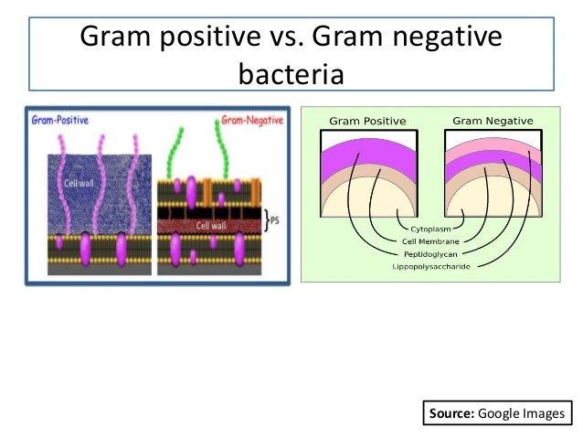 Gram positive vs. Gram negative bacteria Source: Google Images