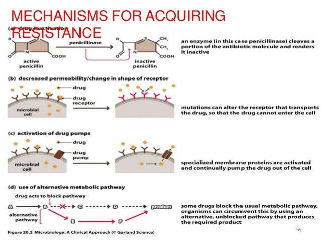 Beta–lactamases
