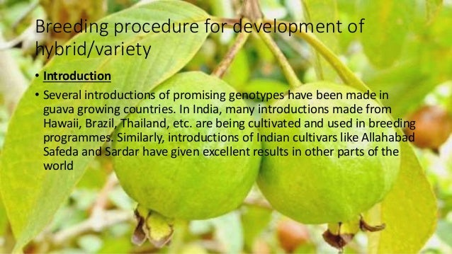 Presentation on Breeding Techniques of Guava