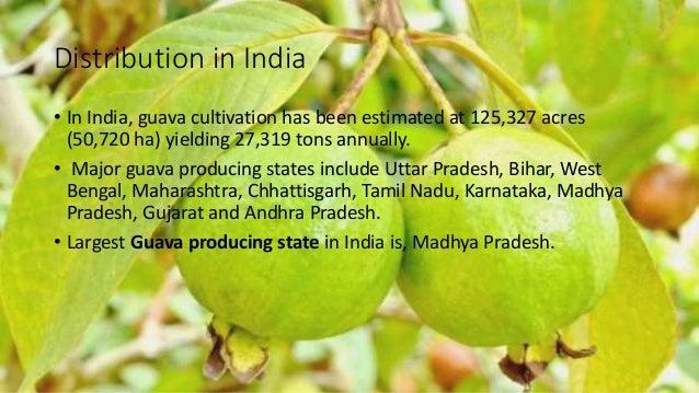Presentation on Breeding Techniques of Guava