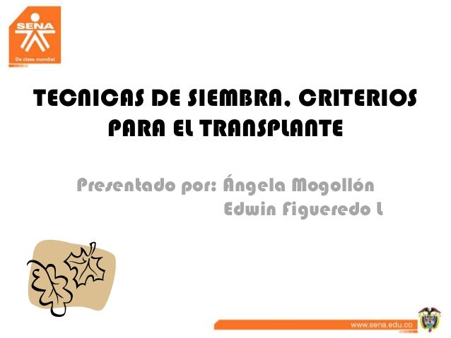TECNICAS DE SIEMBRA, CRITERIOS     PARA EL TRANSPLANTE   Presentado por: Ángela Mogollón                   Edwin Figueredo L