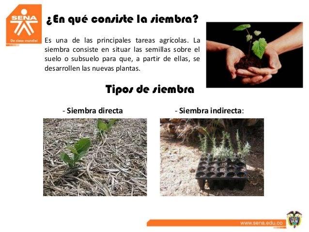 Tecnicas de siembra criterios para el transplante for Plantas hortalizas ejemplos