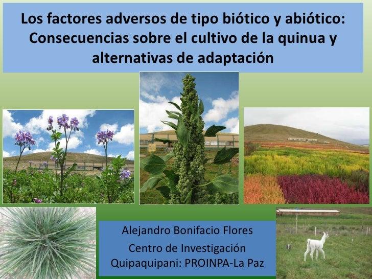 Los factores adversos de tipo biótico y abiótico: Consecuencias sobre el cultivo de la quinua y alternativas de adaptación...