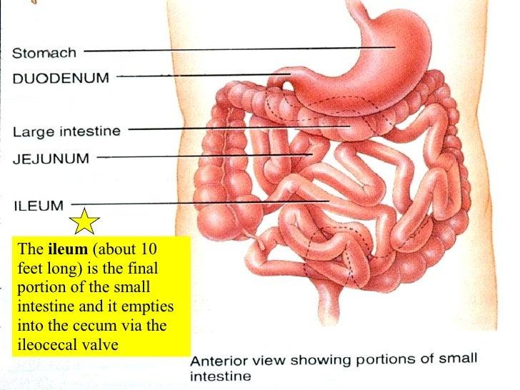 22 Digestive System 2