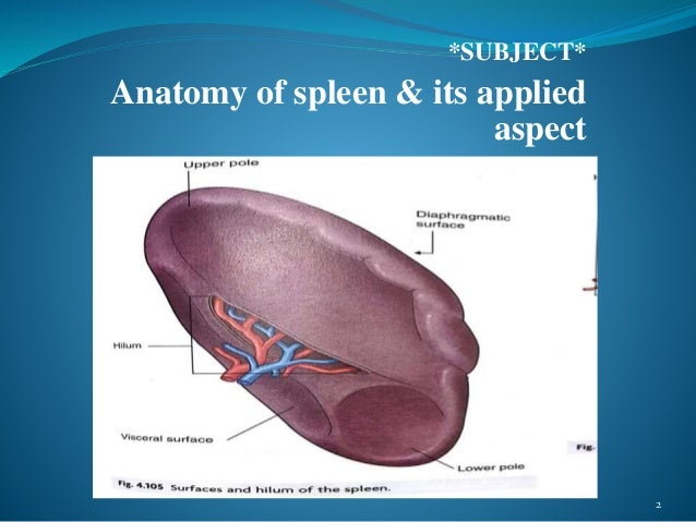 ANATOMY OF SPLEEN AND IT\'S APPLIED ASPECT