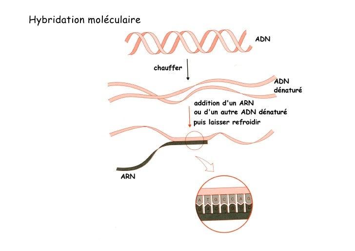 Comment cloner un fragment d'ADN ?