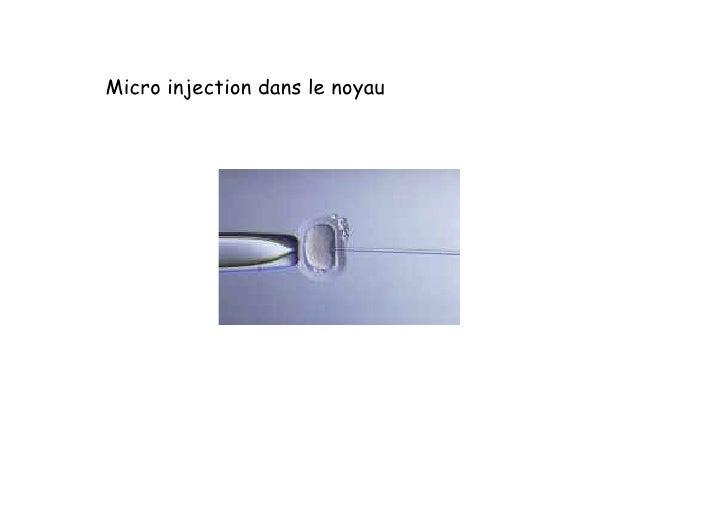 Exemple : chez la souris  Transfert de gènes : souris transgéniques