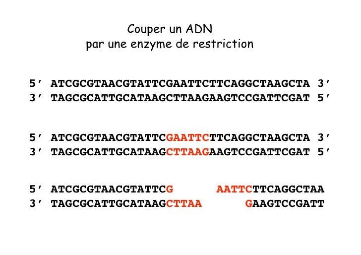 Coller deux fragments d'ADN     5'... TCGCATCACG           AATTCCGATCA ...3' 3'... AGCGTAGTGCTTAA           GGCTAGT ...5' ...