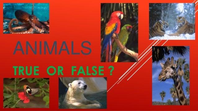 ANIMALSTRUE OR FALSE ?