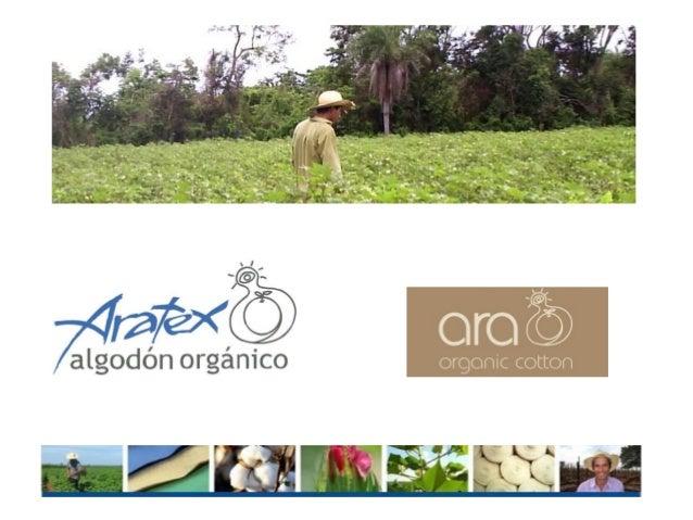 • La producción, procesamiento y comercialización de algodón orgánico en conjunto con pequeños agricultores, se inicia en ...