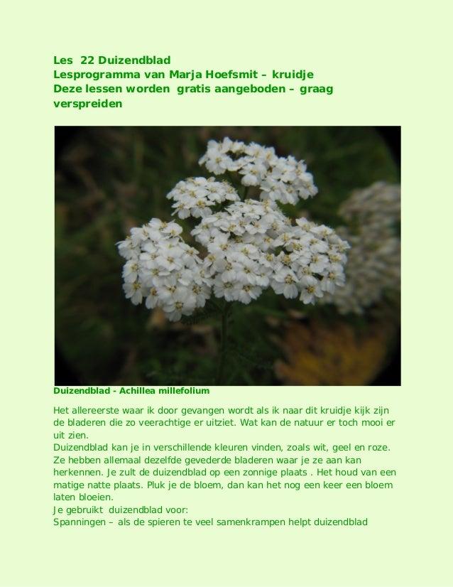 Les 22 Duizendblad Lesprogramma van Marja Hoefsmit – kruidje Deze lessen worden gratis aangeboden – graag verspreiden Duiz...