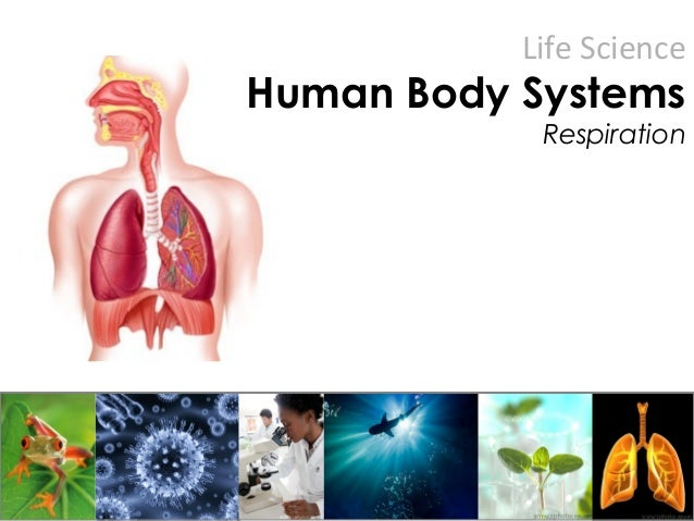Life Science Human Body Systems Respiration
