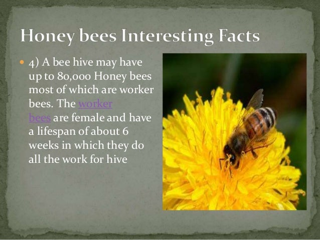 23.Some interesting facts about honey bees A Lecture By Mr ... - photo#14