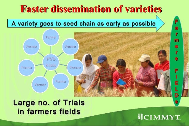 New varieties arebeing released andseed increase is on      the way