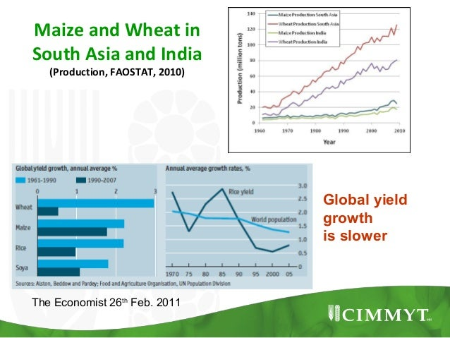 Maize and Wheat inSouth Asia and India   (Production, FAOSTAT, 2010)                                 Global yield         ...