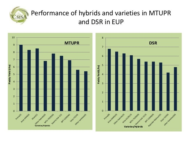 Performance of hybrids and varieties in MTUPR                                         and DSR in EUP                     1...