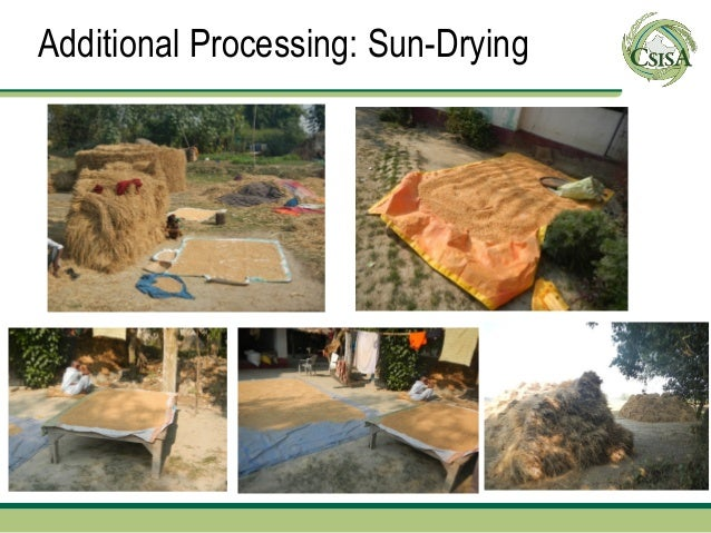 Additional Processing: Sun-Drying
