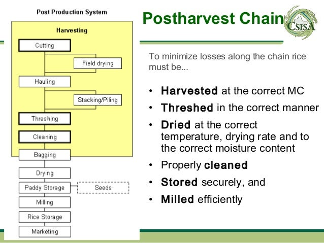Postharvest ChainTo minimize losses along the chain ricemust be...• Harvested at the correct MC• Threshed in the correct m...