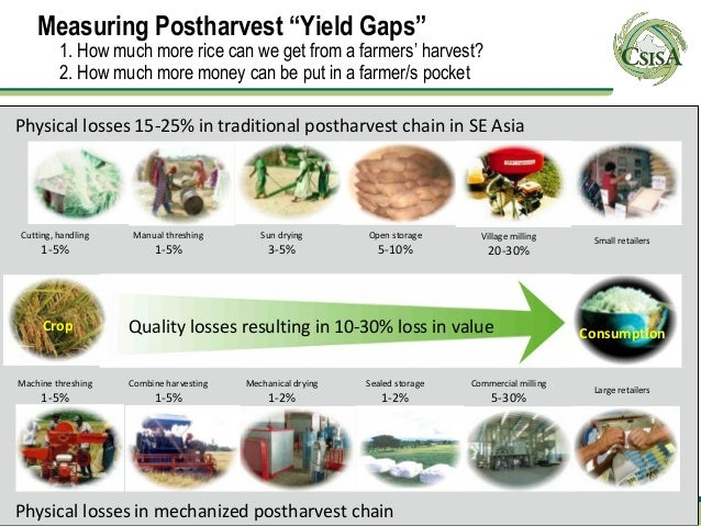 """Measuring Postharvest """"Yield Gaps""""         1. How much more rice can we get from a farmers' harvest?         2. How much m..."""