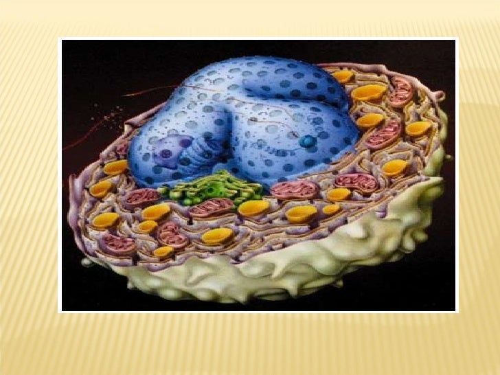 2 + 3. cell biology  introduction + fluid mosaic model