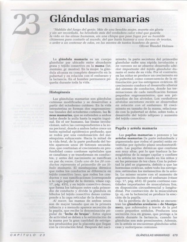 23 glandulas-mamarias1