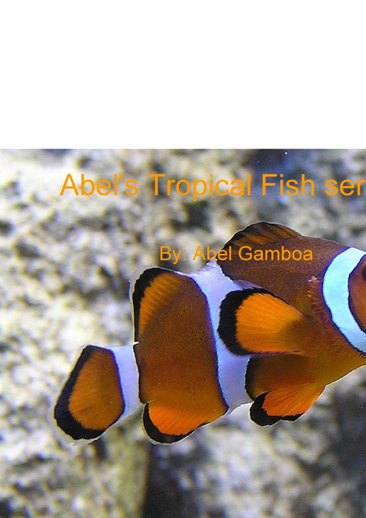 Abel's Tropical Fish services By: Abel Gamboa