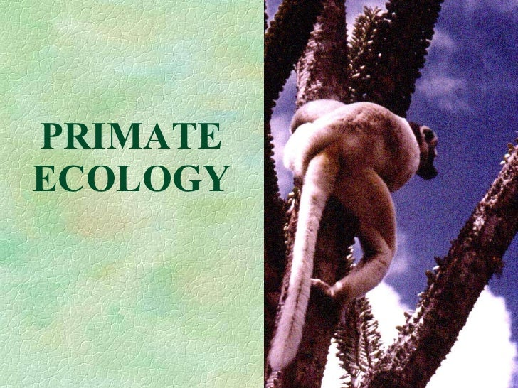PRIMATE ECOLOGY