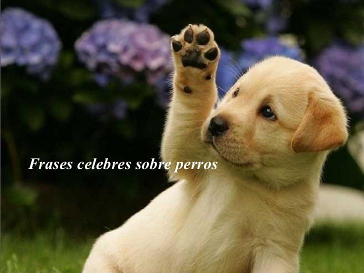 Imagenes De Perritos Lindos Con Frases Imagui