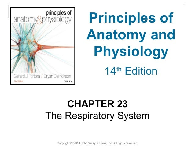 23 [chapter 23 the respiratory system]