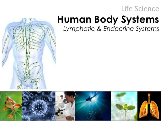 Life Science Human Body Systems Lymphatic & Endocrine Systems