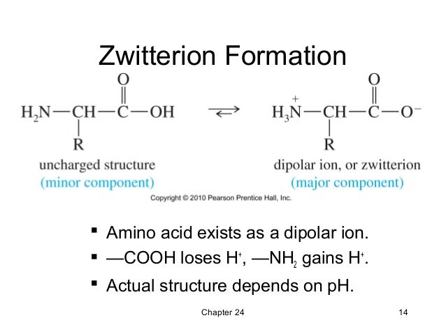 24 - Amino Acids, Peptides, and Proteins - Wade 7th