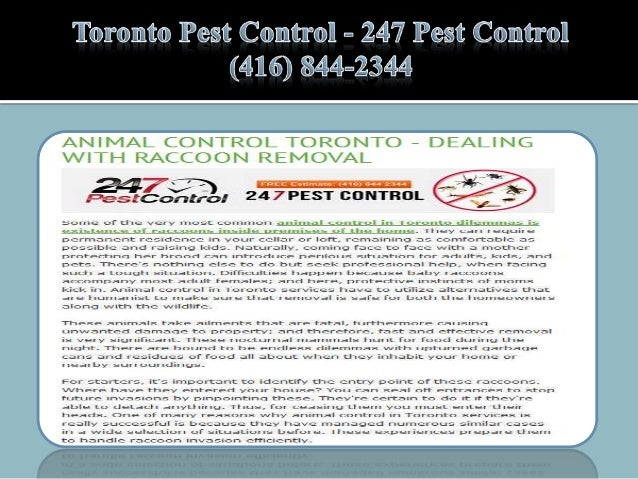 Toronto Pest Control - 247 Pest Control (416) 844-2344