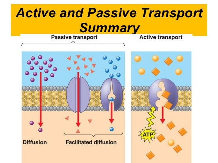 2.4 Cell Membrane And Transport