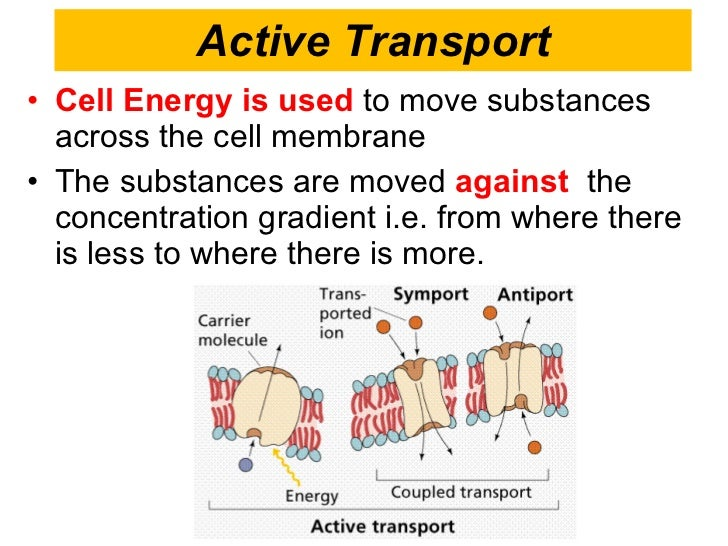the different cell membrane transport mechanisms The cell membrane effectively isolating the two sides of the membrane different kinds of membranes and is the only transport mechanism that can transport.
