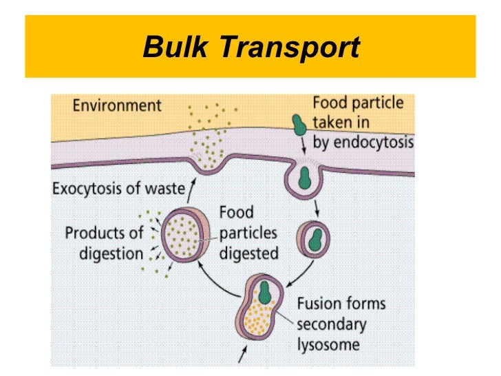 Image result for bulk transport
