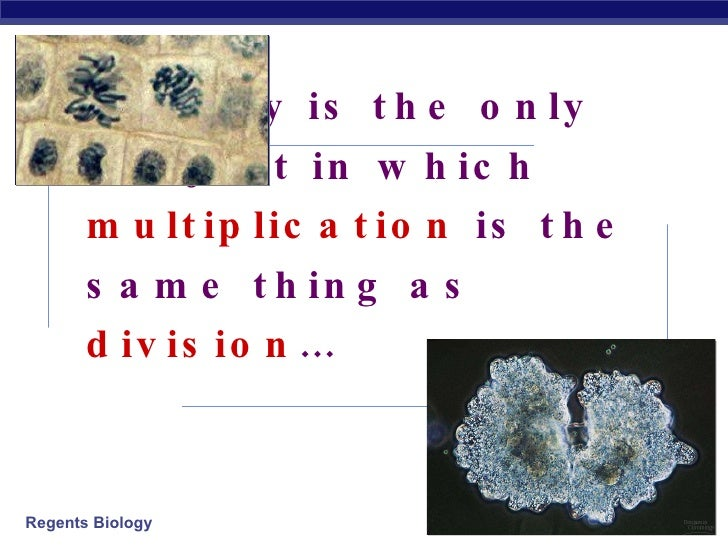 Biology is the only subject in which  multiplication  is the same thing as  division … 2006-2007