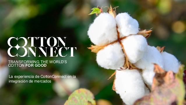 TRANSFORMING THE WORLD'S COTTON FOR GOOD La experiencia de CottonConnect en la integración de mercados
