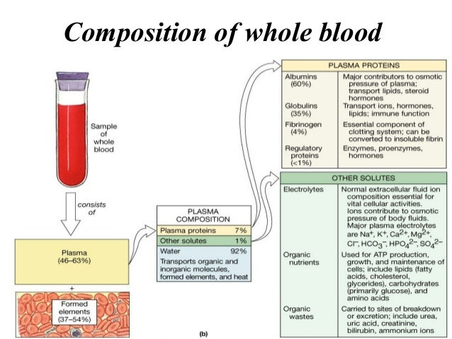 components of blood transport White blood cells, also called leukocytes, are the disease-fighting components of blood they account for just 1% of circulating blood but multiply during infection or inflammation they account for just 1% of circulating blood but multiply during infection or inflammation.