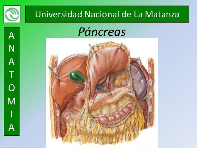 Universidad Nacional de La MatanzaA             PáncreasNATOMIA