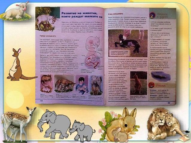 25. Развитие на животни, които раждат малките си - ЧП, 4 клас, Булвест Slide 2