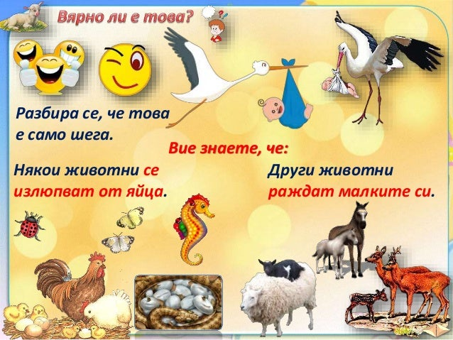 25. Развитие на животни, които раждат малките си - ЧП, 4 клас, Булвест Slide 3