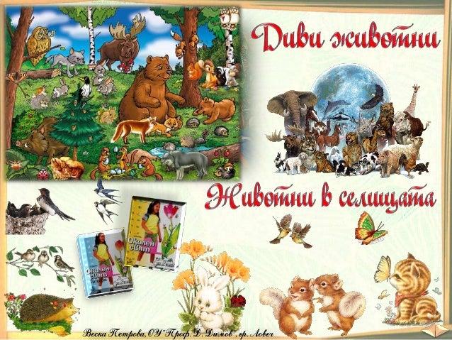 25. Диви животни. Животни в селищата - ОС, Анубис - В. П. Slide 1