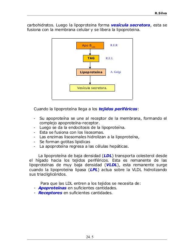 R.Silva carbohidratos. Luego la lipoproteina forma vesícula secretora, esta se fusiona con la membrana celular y se libera...