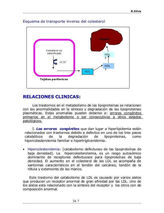 R.Silva Esquema de transporte inverso del colesterol RELACIONES CLINICAS: Los trastornos en el metabolismo de las lipoprot...