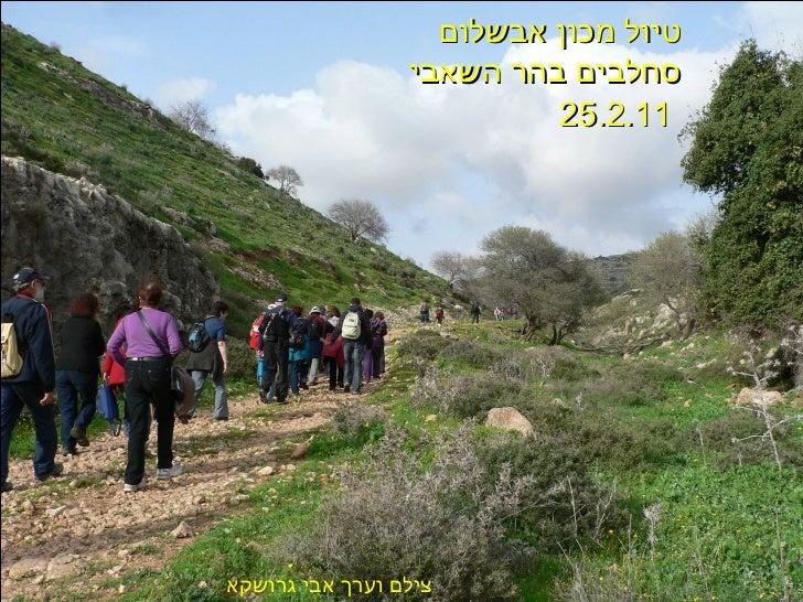 טיול מכון אבשלום  סחלבים בהר השאבי 25.2.11   צילם וערך אבי גרושקא