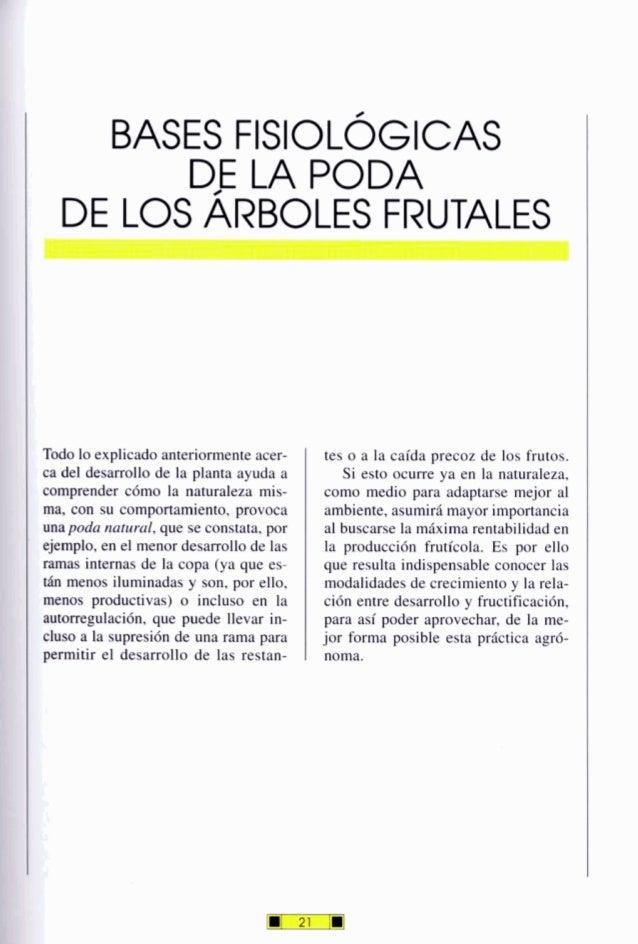 BASES FISIOLÓGICAS DE LA PODA DE LOSARBOLES FRUTALES Todo lo explicado anteriormente acer- ca del desarrollo de la planta ...
